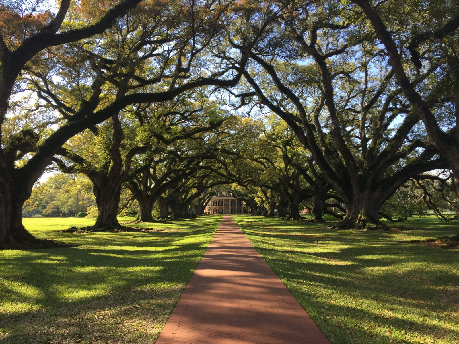 Oak Alley's Famous Live Oaks