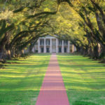 Oak Alley Tree Tunnel